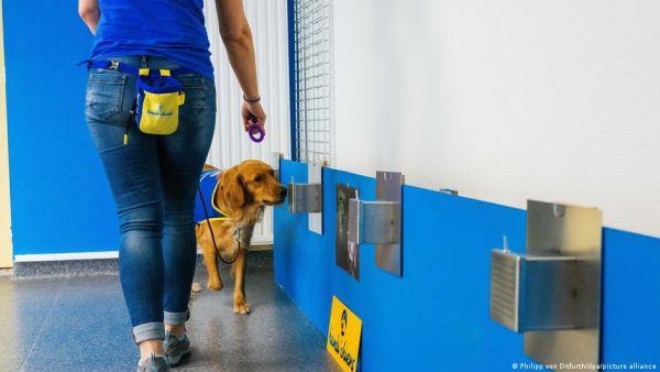 Κοροναϊός: Γηροκομείο χρησιμοποιεί σκύλο αντί για τεστ