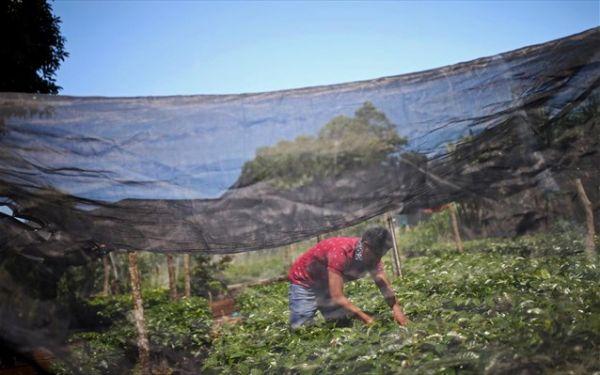 ΥΠΑΑΤ: Ποια είναι τα δικαιολογητικά για την παράταση της απασχόλησης των εργατών γης
