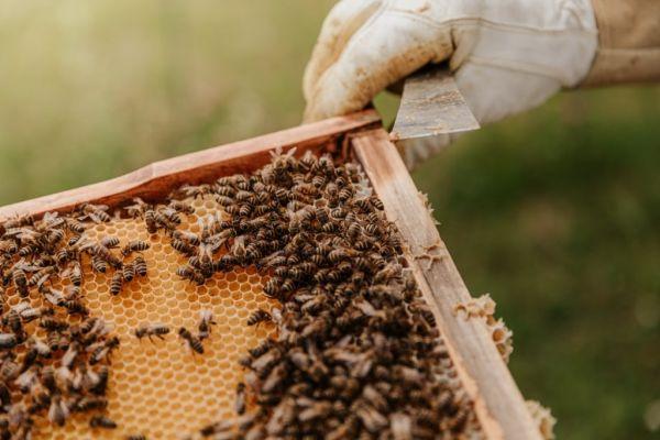 Τα αφανή θύματα των πυρκαγιών – Χάθηκαν 9.000 μελισσοσμήνη και τόνοι μελιού
