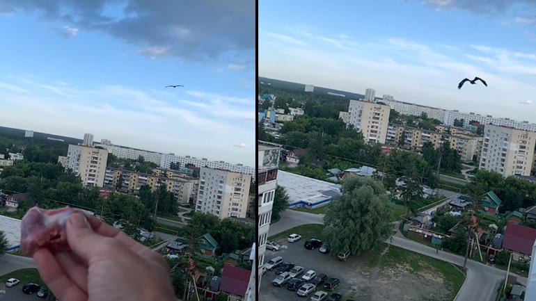 Άνδρας ταΐζει έναν αετό από το παράθυρό του