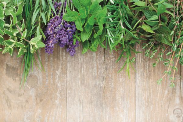 Ενοχλητικά κουνούπια; Αυτά είναι τα έντεκα φυτά που θα σώσουν