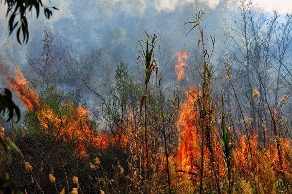 Φωτιά στην Πάρνηθα: Μία προσαγωγή για εμπρησμό