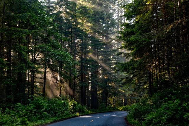 Καλιφόρνια: Μαίνονται οι πυρκαγιές - Τύλιξαν με πυρίμαχη κουβέρτα το μεγαλύτερο δέντρο του κόσμου