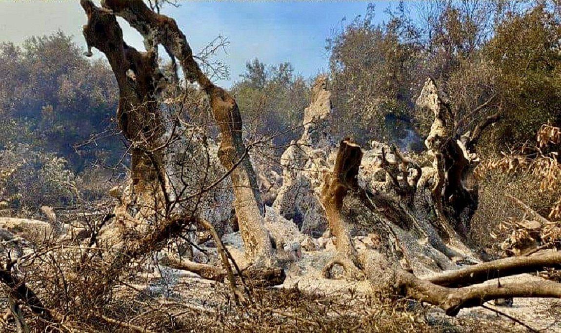 Β. Εύβοια: Ανάκληση άδειας έκτασης Αιολικού Πάρκου ζητάει από την ΡΑΕ ο Κώστας Σκρέκας