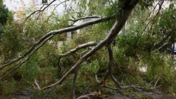 Απλοποιείται η διαδικασία για κλαδεύσεις & απομακρύνσεις δέντρων σε ιδιωτικές εκτάσεις εκτός ορίων οικισμού