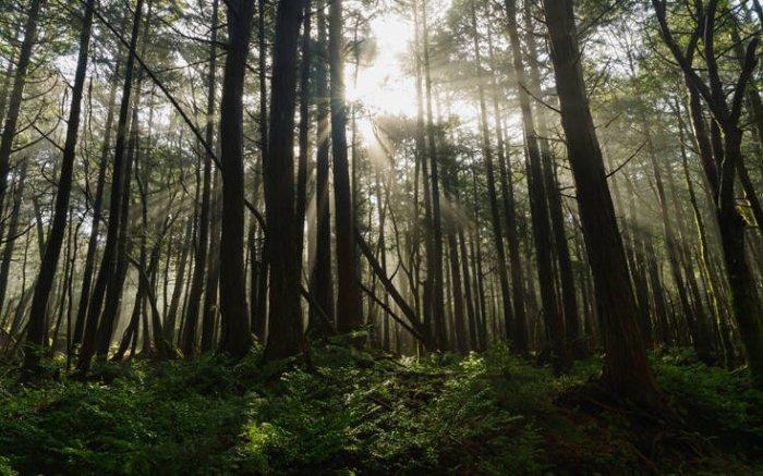 Ξεμπλοκάρουν οι δασικοί χάρτες - Πλησιάζει η ενεργοποίηση της πλατφόρμας δήλωσης δασικών αυθαιρέτων