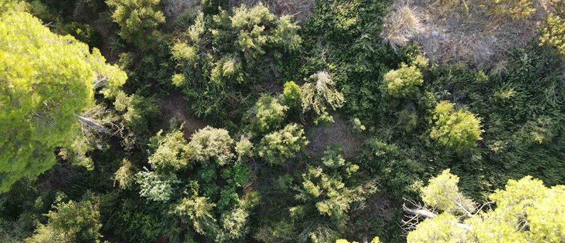 Αυλώνας: Χασισοφυτεία σε δασώδη περιοχή (εικόνες)
