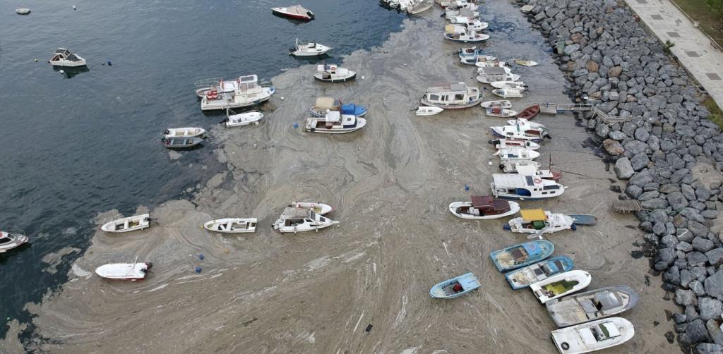 Θάλασσα Μαρμαρά – Η βλέννα θα φτάσει σιγά σιγά και στη χώρα μας – Τι λέει καθηγητής ωκεανογραφίας