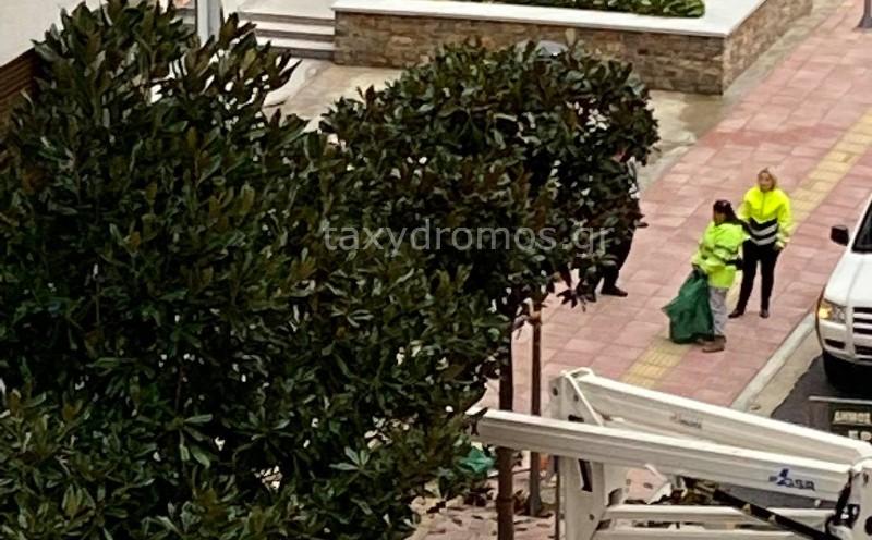 Εργασίες κλαδέματος δέντρων στην Δημητριάδος