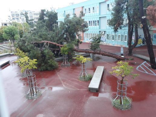 Θεσσαλονίκη : Έπεσε δέντρο σε σχολείο λίγο πριν από την προσέλευση των μαθητών