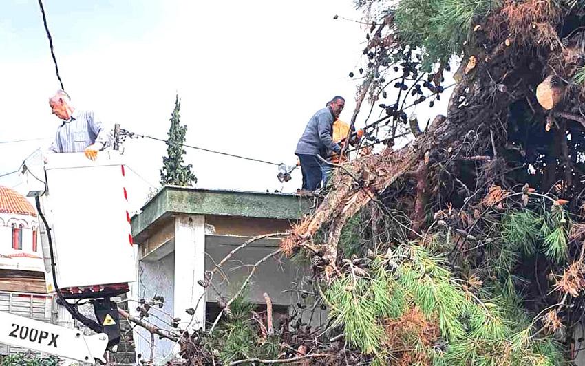 Επικίνδυνα δέντρα  σε Διμήνι και Σέσκλο