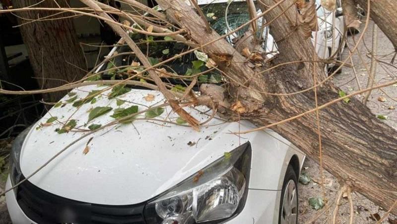ΙΧ εν κινήσει καταπλακώθηκε από δέντρο