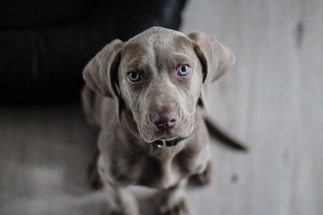 Σέρρες – Έδεσε σκύλο σε αυτοκίνητο και άρχισε να τον σέρνει