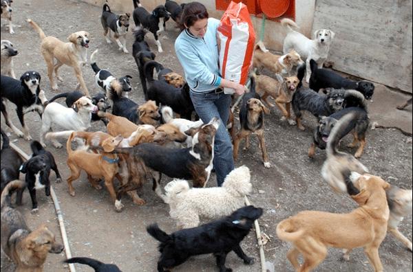 Με «τσιπάκι» όλα τα ζώα συντροφιάς