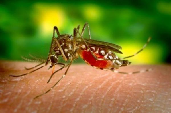 Δύο θάνατοι από τον ιό του Νείλου
