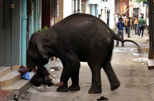 Αφηνιασμένοι ελέφαντες εισέβαλαν σε πόλη