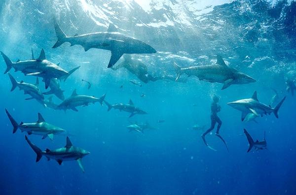 Κολυμπώντας με τους... καρχαρίες!