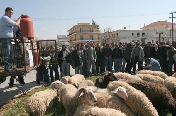 Συστήνεται Ομοσπονδία Κτηνοτρόφων
