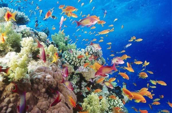 Δεν γνωρίζουμε 750.000 είδη στον βυθό!