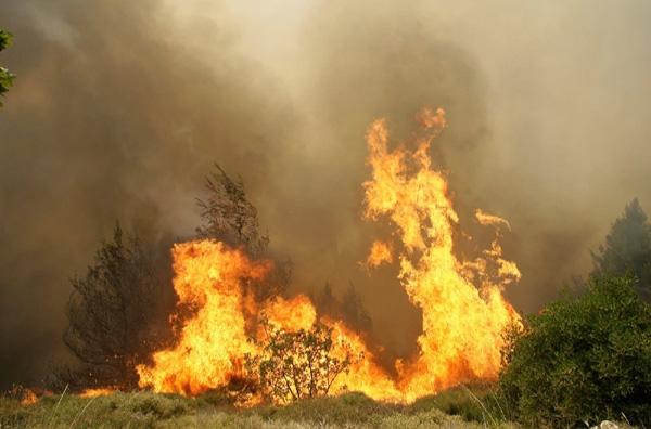 Νωρίς - νωρίς οι πρώτες πυρκαγιές στο Ν. Πήλιο